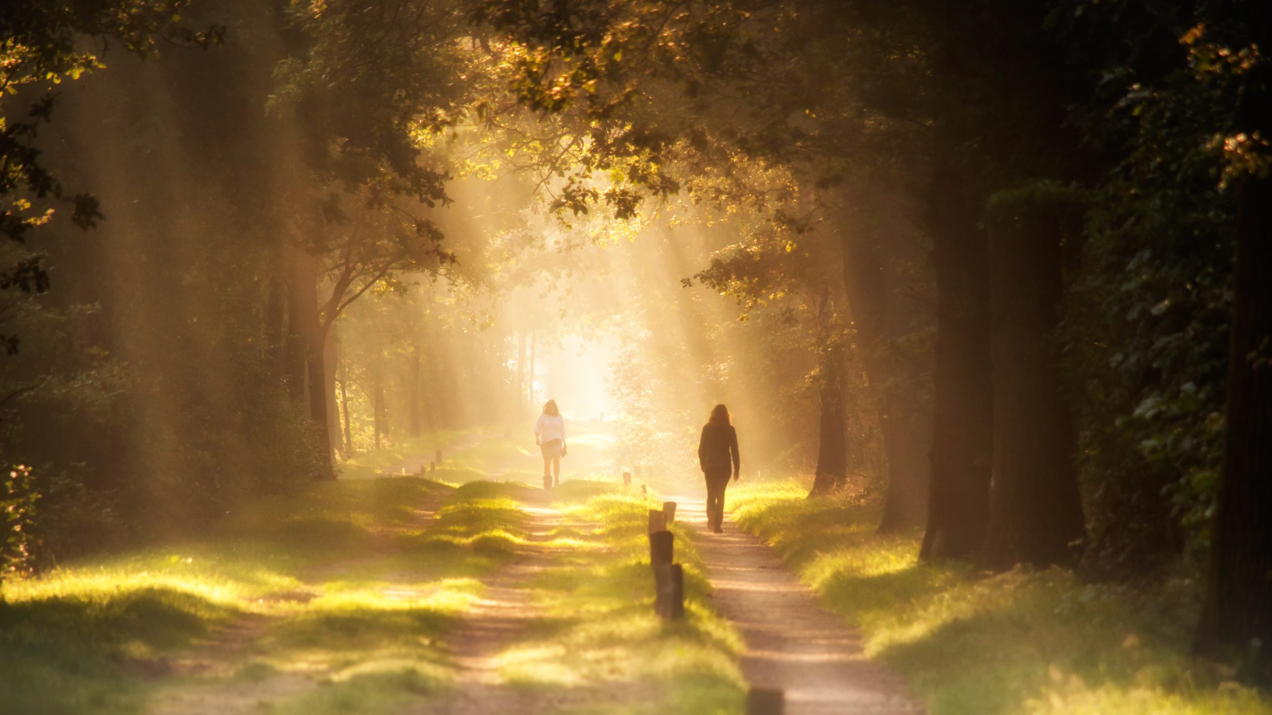 two people walking down two parallel paths towards the light in the forest